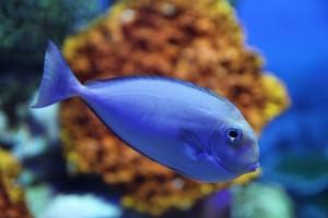 fish-800345_960_720